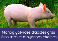 Monoglycerides of short and medium chain fatty acids